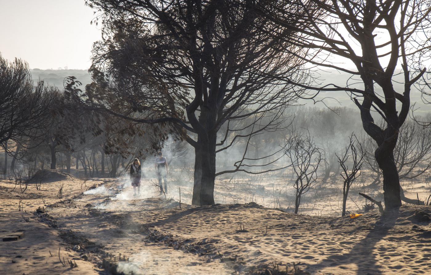 el-seprona-investiga-sobre-el-terreno-para-dar-con-la-causa-del-fuego